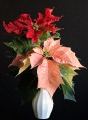 Poinsettia Arrangement